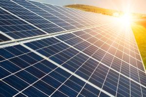 Musk solar